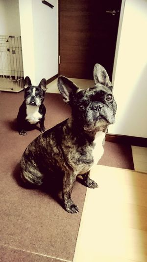 あれから、6年...忘れる事がないように、前を向いていこう‼ Day Love Dog Frenchbulldoglovers I Love My Dog French Bulldog Dog Love Frenchbulldog Frenchbulldoglove Enjoying Life Pets At Home 東日本大震災 東日本大震災から6年