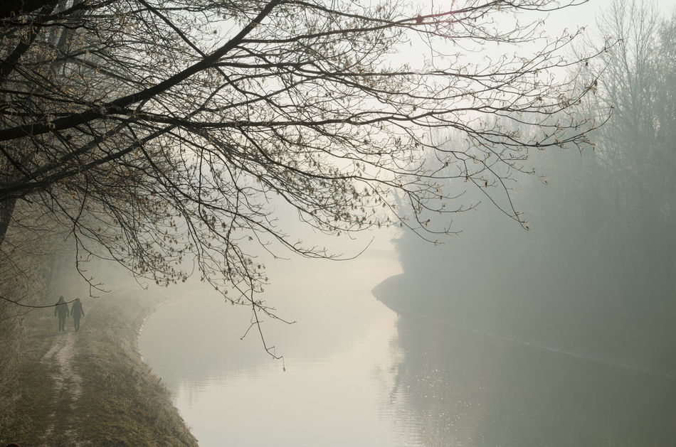 Foggy morning Beauty In Nature Calmness Day Fog Foggy Foggy Morning Forest Fresh Frost Frosty Frosty Mornings Mist Morning Morning Light Nature No People Outdoors Reflection River Scenics Sky Sun Sunshine Tranquility Tree