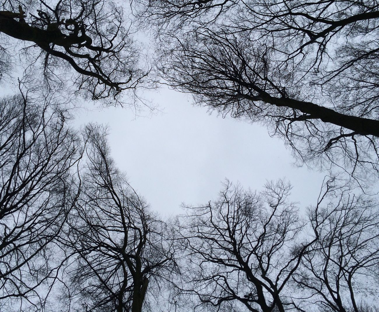 Birdshaped?! Shapes In Nature  Trees And Sky Treetops Interesting Perspectives From My Point Of View Leaveless Woodscapes What Eye See  Lookingup
