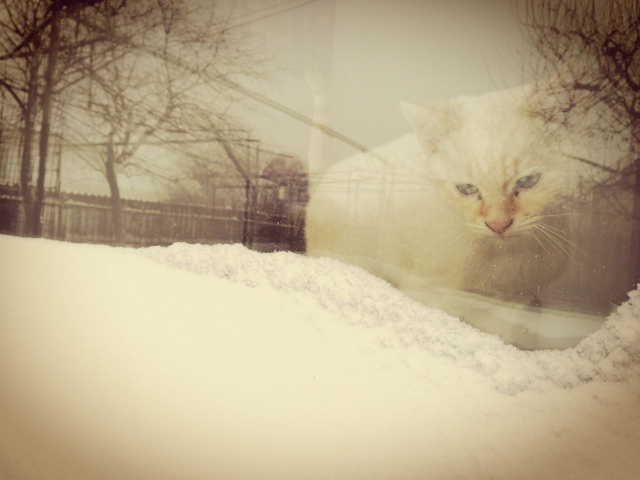 domestic cat, winter, cold temperature, snow, feline, pets, domestic animals, animal themes, nature, mammal, one animal, no people, persian cat, bleak, day, outdoors