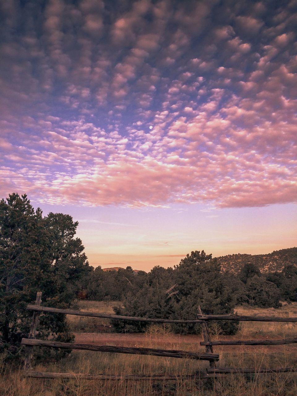 scenics, tranquility, landscape, sunset, nature, tree, tranquil scene, sky, no people, beauty in nature, outdoors, day