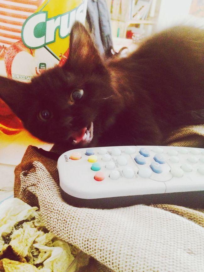 Jeremy me Cat
