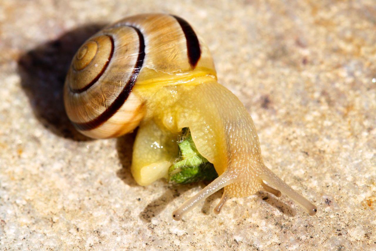 Schnecke Animal Animals Escargot EyeEm Nature Lover Nature Schnecke Schnecken Slug Snail Tiere