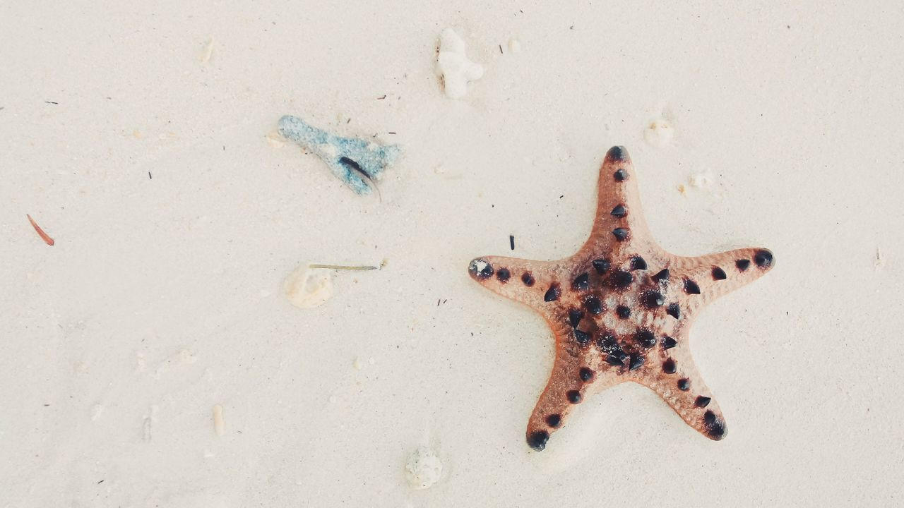 Beautiful stock photos of stars, Animal Themes, Animals In The Wild, Beach, Beauty In Nature
