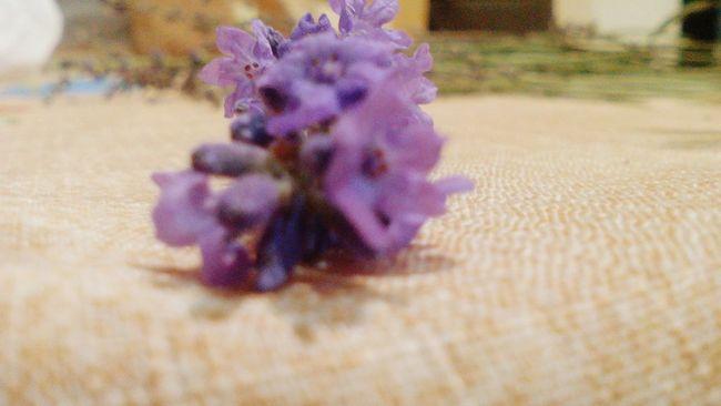 Очень красивый цветок выгледит именно так!! Цветок моего сердца красота💕🌸🌹 First Eyeem Photo