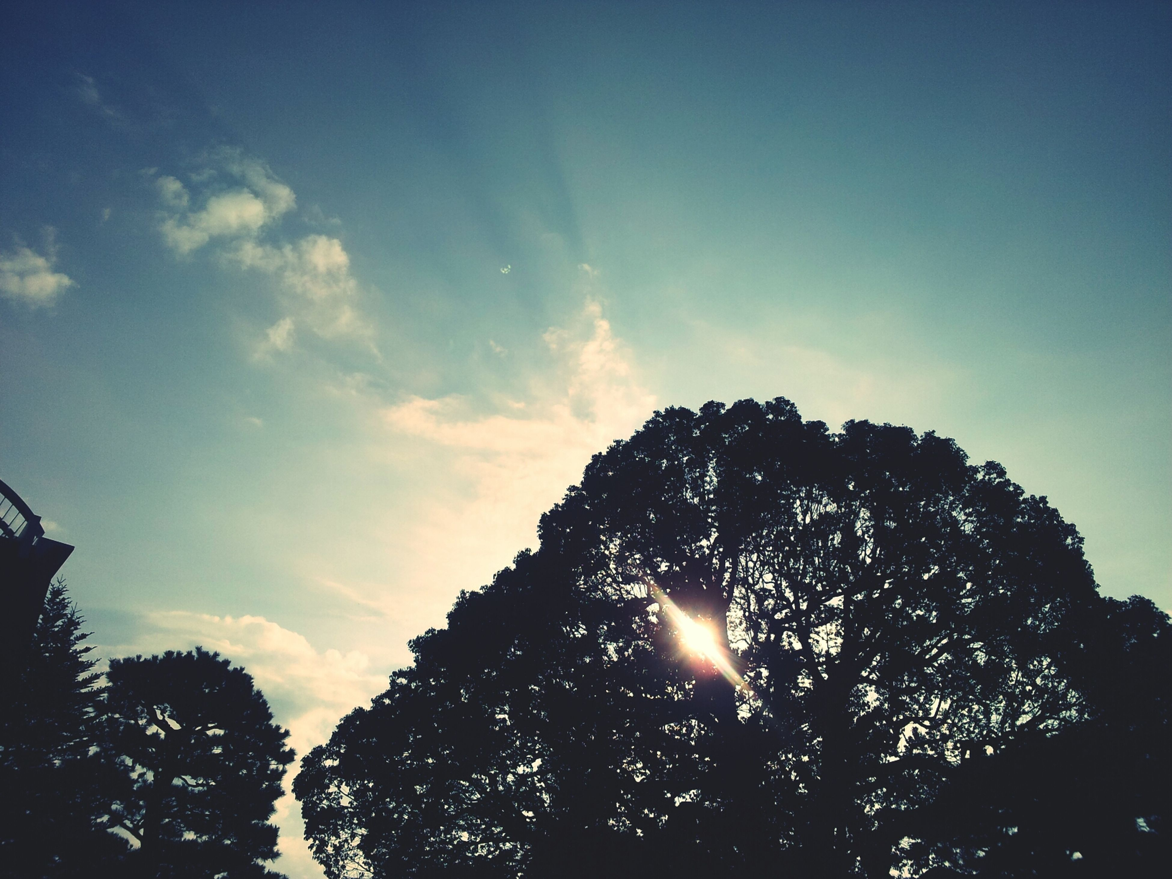 low angle view, silhouette, tree, sky, sun, nature, sunlight, growth, tranquility, sunbeam, beauty in nature, back lit, outdoors, lens flare, no people, high section, cloud - sky, scenics, clear sky, sunset