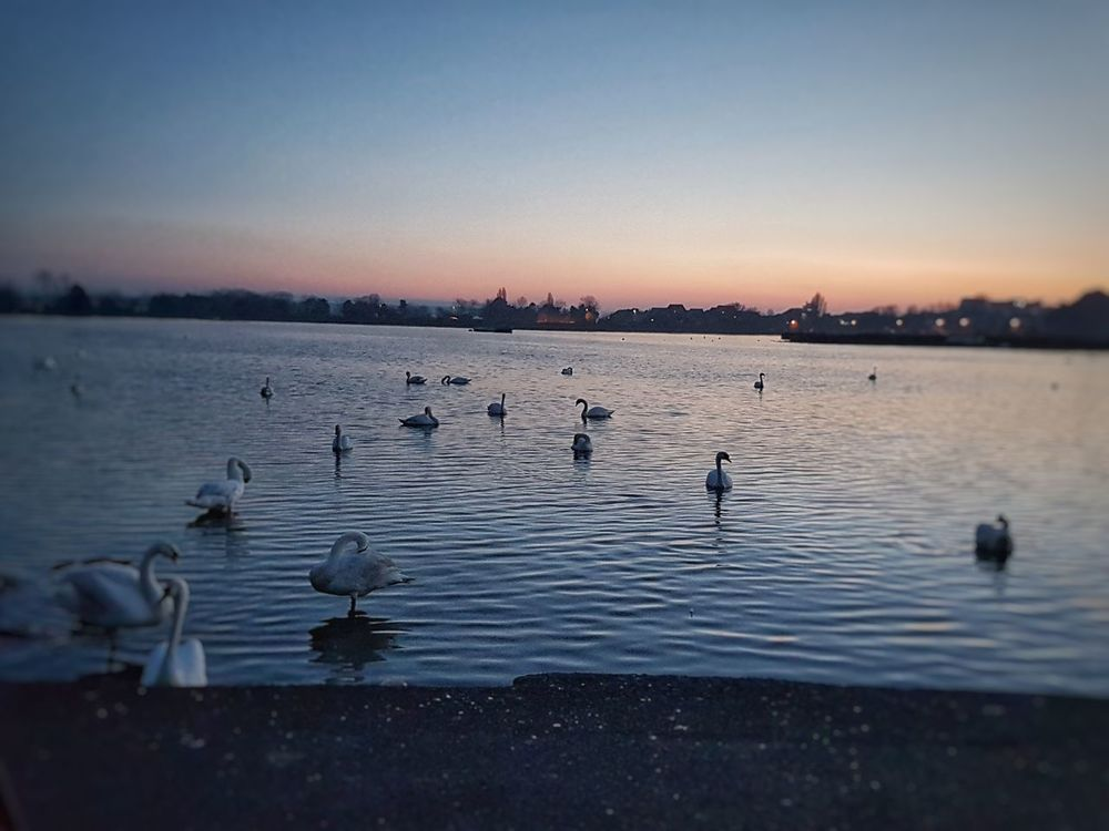 Sunset Large Group Of Animals Bird Outdoors Lake Water Nature Beauty In Nature No People Animal Themes Flock Of Birds Poole, Dorset On A Journey Besteyemphoto Sky