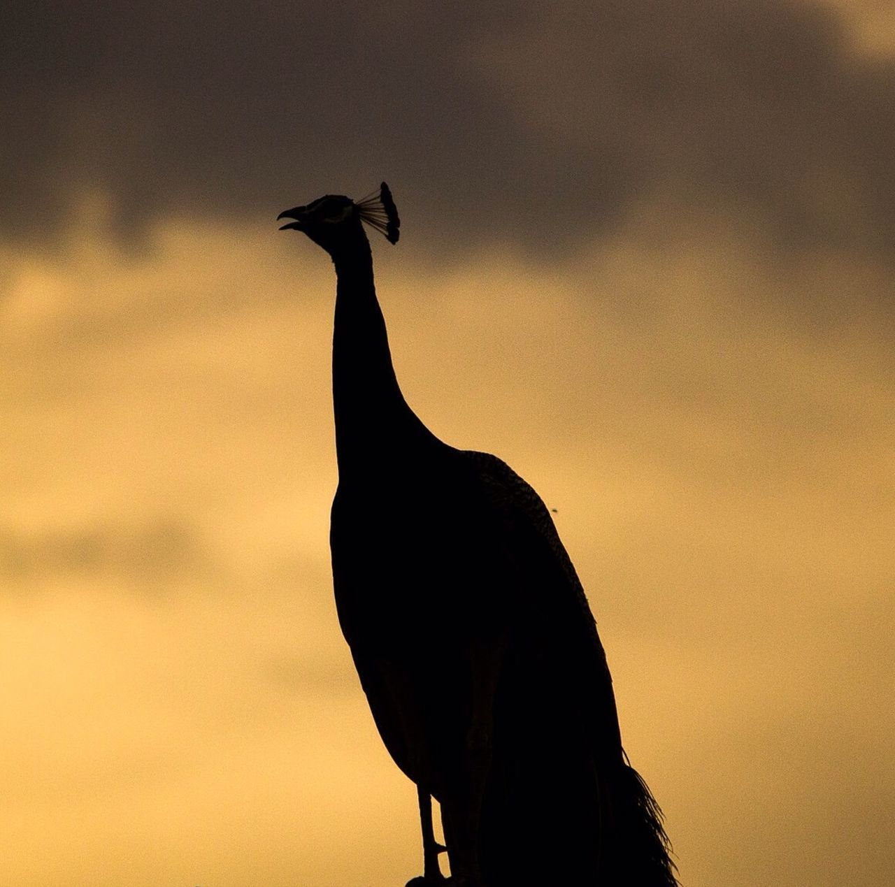 Beautiful stock photos of silhouette, Animal Themes, Animals In The Wild, Beauty In Nature, Dusk