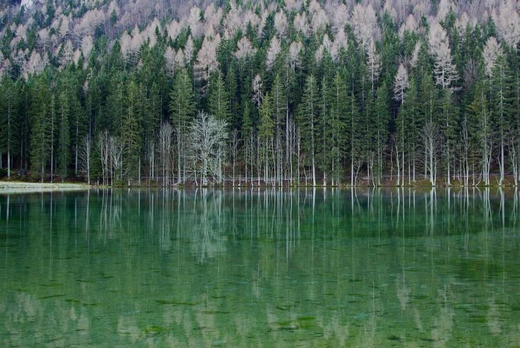 Reflected Glory Reflection Water Reflections Green Slovenia Jezersko EyeEm Nature Lover Landscapes With WhiteWall Trees Lake Nature Water Autumn Idyllic Calm Calmness Peaceful Scenics Scenic No People Outdoors Day Forest Landscape Fall