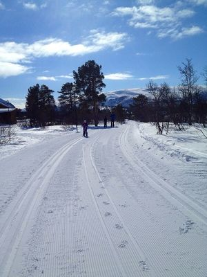 cross country skiing in Hovden by Veronica