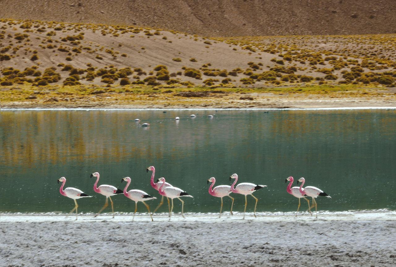Beautiful stock photos of wüste, Antofagasta, Chile, Horizontal Image, animal themes
