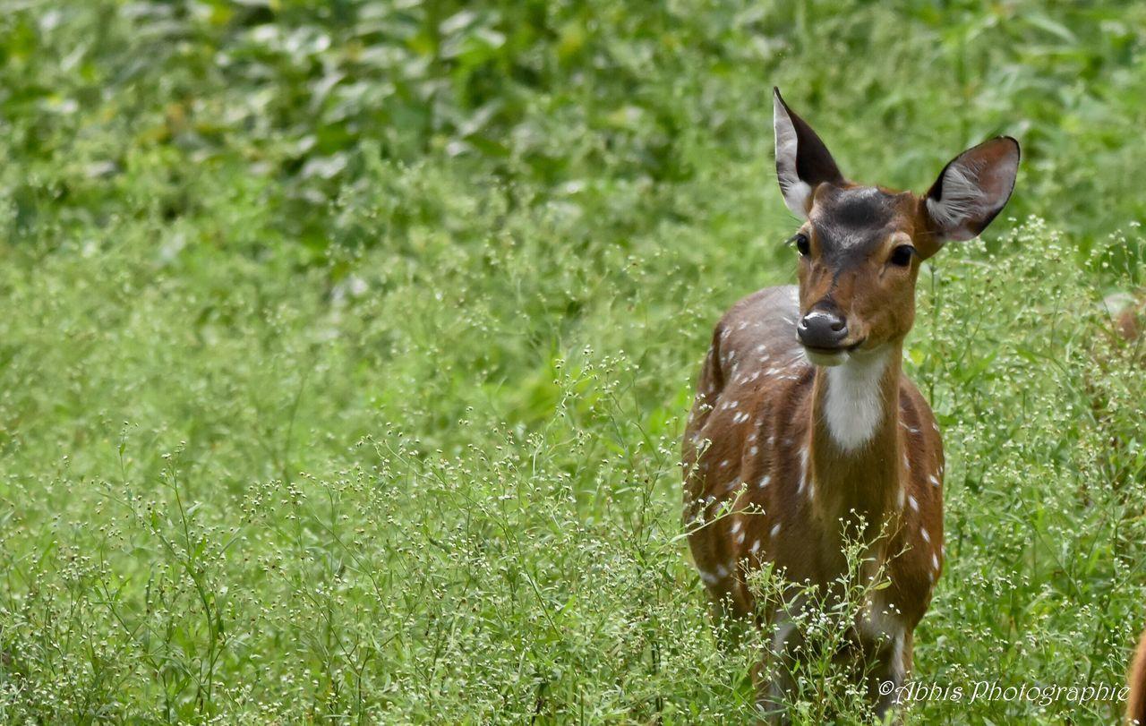 Portrait Of A Dog On Grassy Field