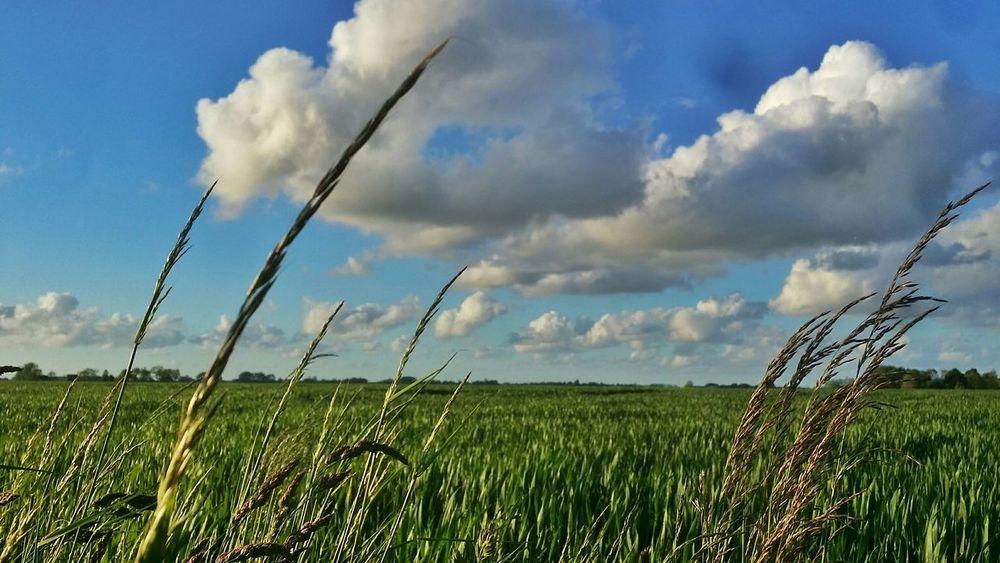 Clouds And Sky Hogeland Farmland Groningen Grassland Natures Diversities