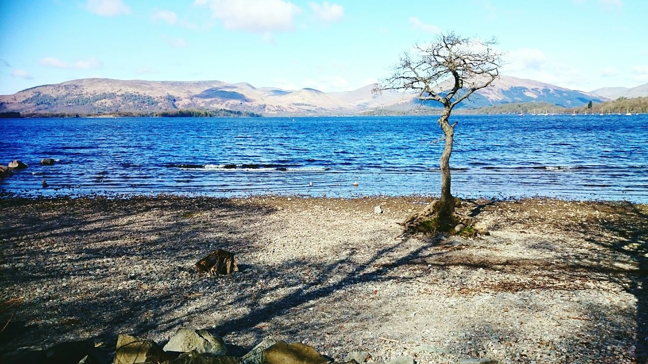 Beach Nature Tree Water Sand Outdoors No People Tranquil Scene Sky Beauty In Nature Day Scenics Landscape Refraction Scotland Loch  LochLomond Loch Lomond Loch Lommond Loch Lomond Shores