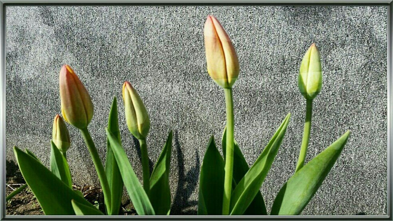 Photo Des Fleurs Spring