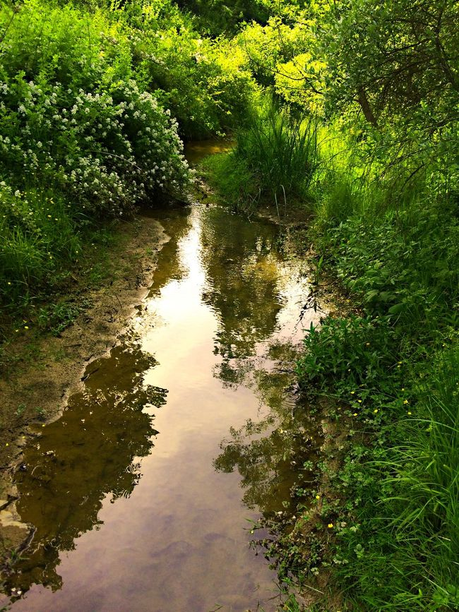 Beauty In Nature Canal Day Grass Green Green Color Growth Idyllic Lake Lush Foliage Nature No People Non Urban Scene Non-urban Scene Outdoors Plant Reflection Remote Scenics Standing Water Stream Tranquil Scene Tranquility Tree Water