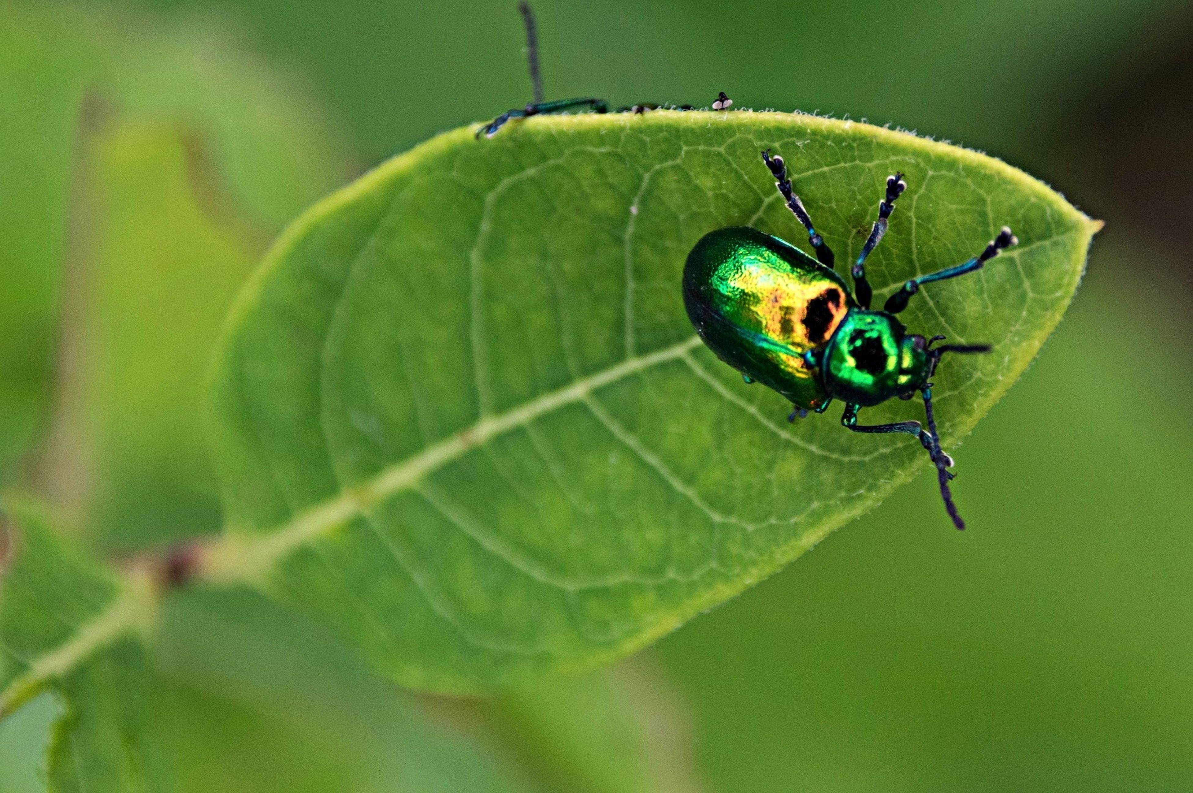 animal themes, one animal, animals in the wild, insect, wildlife, close-up, green color, focus on foreground, spider, leaf, zoology, full length, selective focus, nature, day, no people, outdoors, animal markings, animal antenna, natural pattern