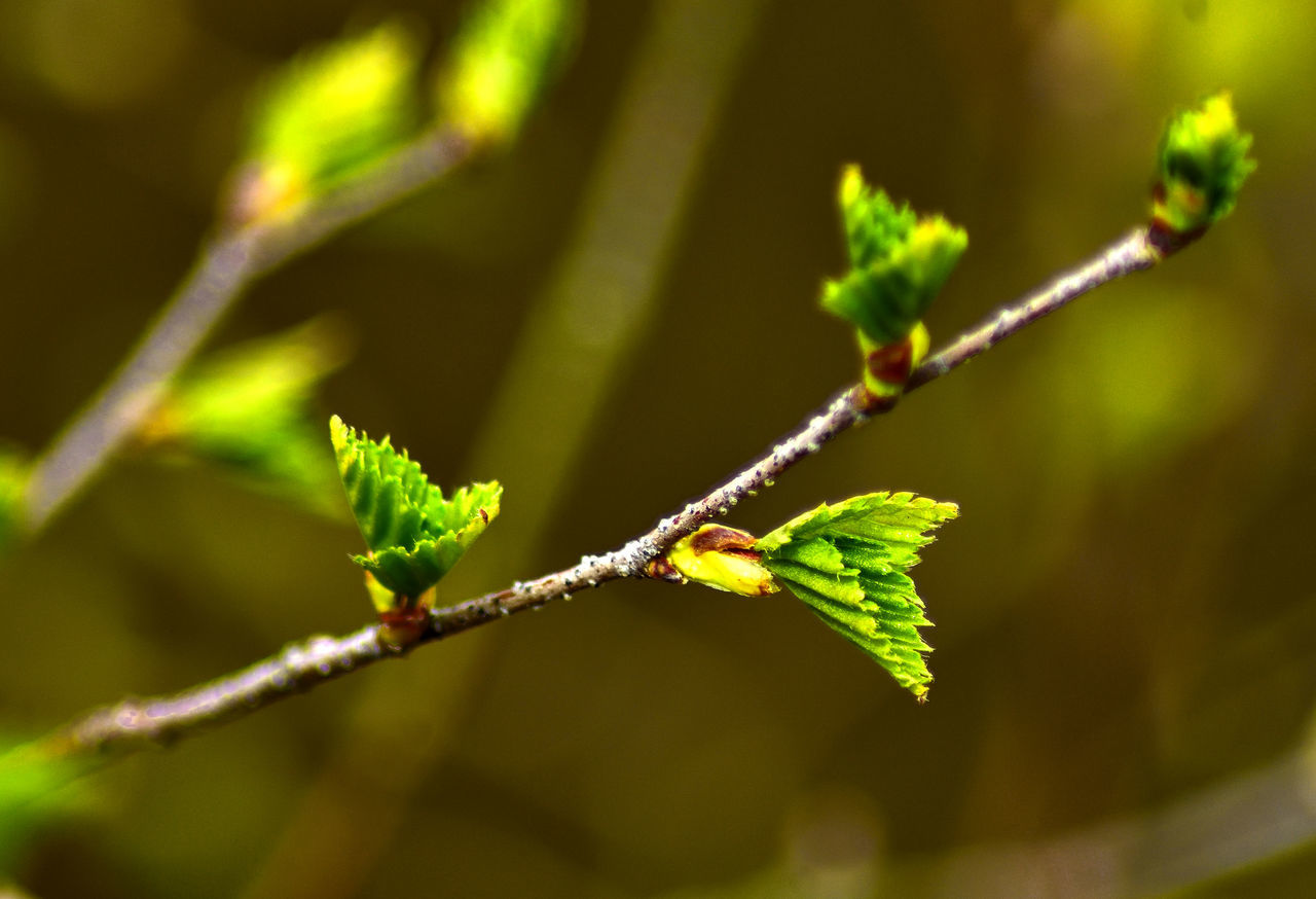 Elstead Moat heathland Close-up Focus On Foreground Fresh Green Color Growth Leaf Nature New Growth Outdoors Plant Selective Focus Stem Twig Young Leaves