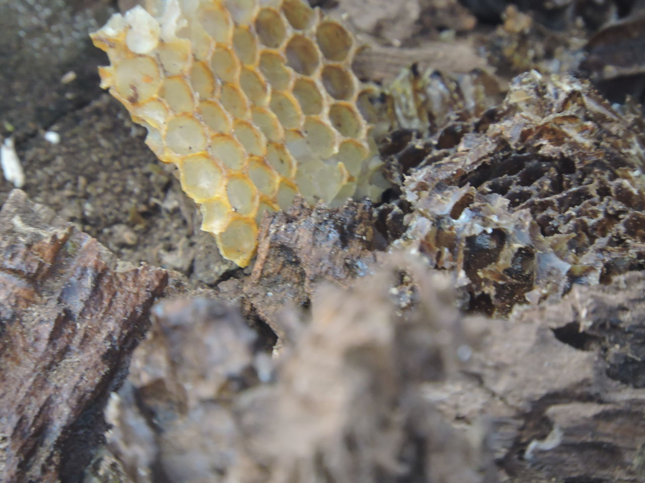 no people, nature, textured, close-up, outdoors, rough, day, rock - object, honeycomb, animals in the wild, fungus, animal themes, beauty in nature, fragility