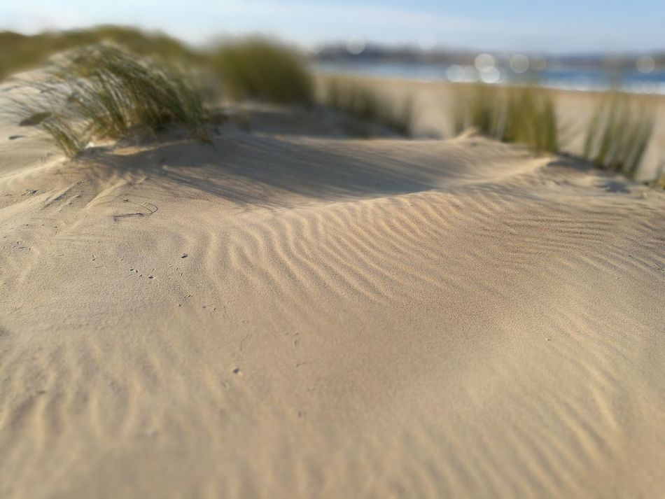 Tranquility Sand Nature Tranquil Scene Landscape Beauty In Nature Day Beach Outdoors Sand Dune Scenics Close-up No People Sky Noedit Nofilter HuaweiP9 EyeEm Nature Lover Eyeemvision Beauty In Nature EyeEm Best Shots EyeEm Gallery Miles Away