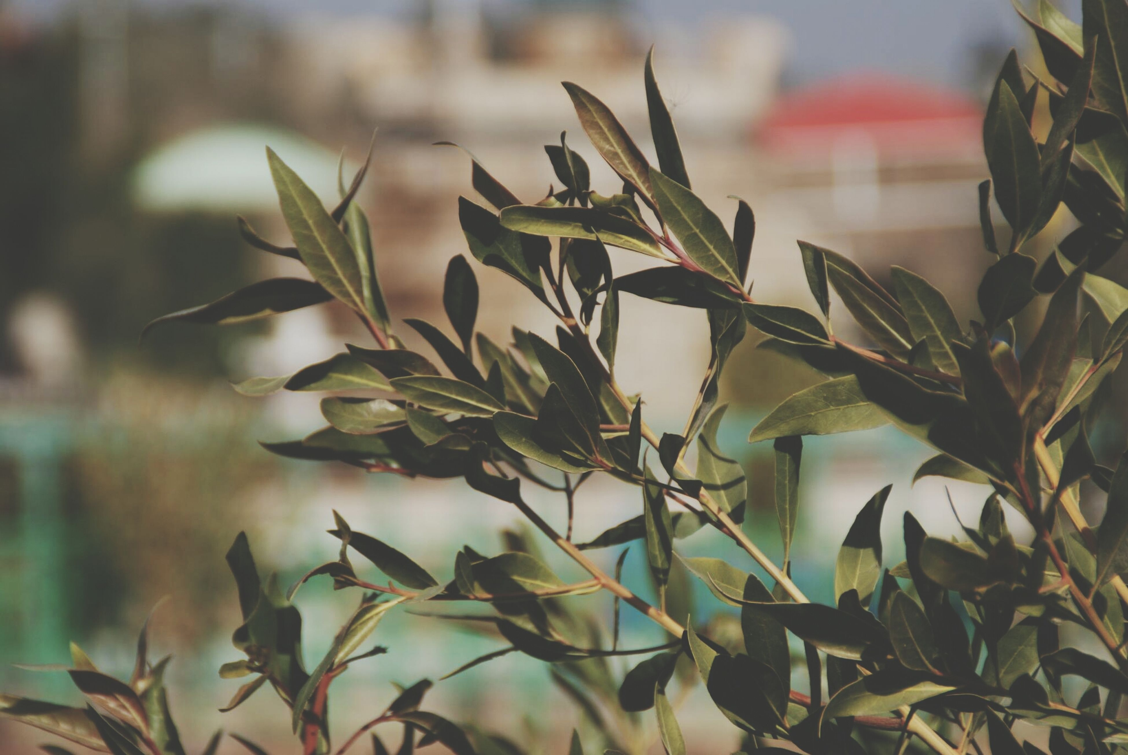 leaf, growth, plant, close-up, focus on foreground, nature, green color, stem, growing, beauty in nature, leaves, selective focus, no people, outdoors, sunlight, twig, day, tranquility, freshness, green