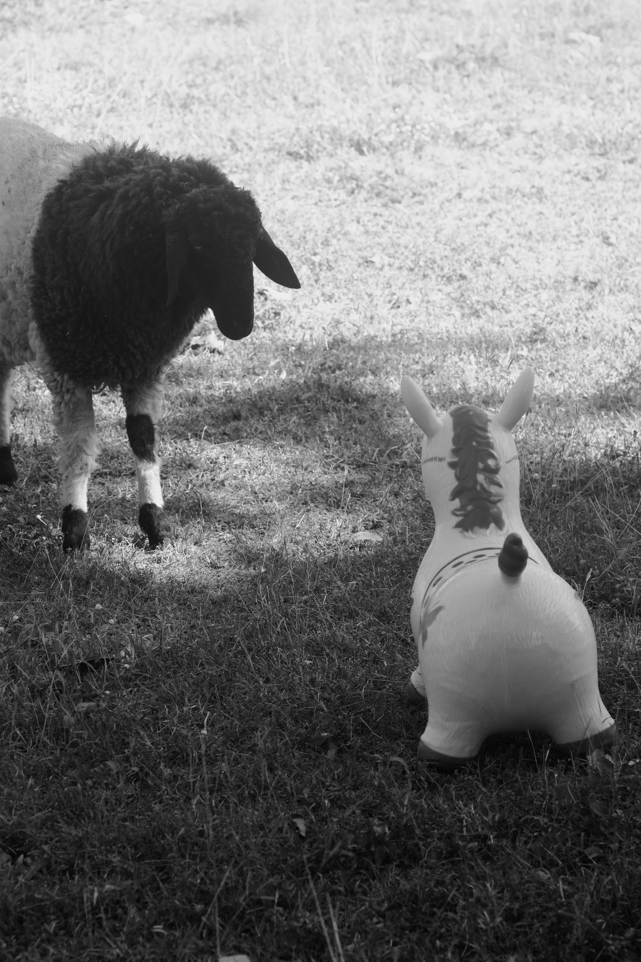 What is true in life. Animal Themes Fake Farm Horses One Animal Satirical Sheep Black & White B&w Nature