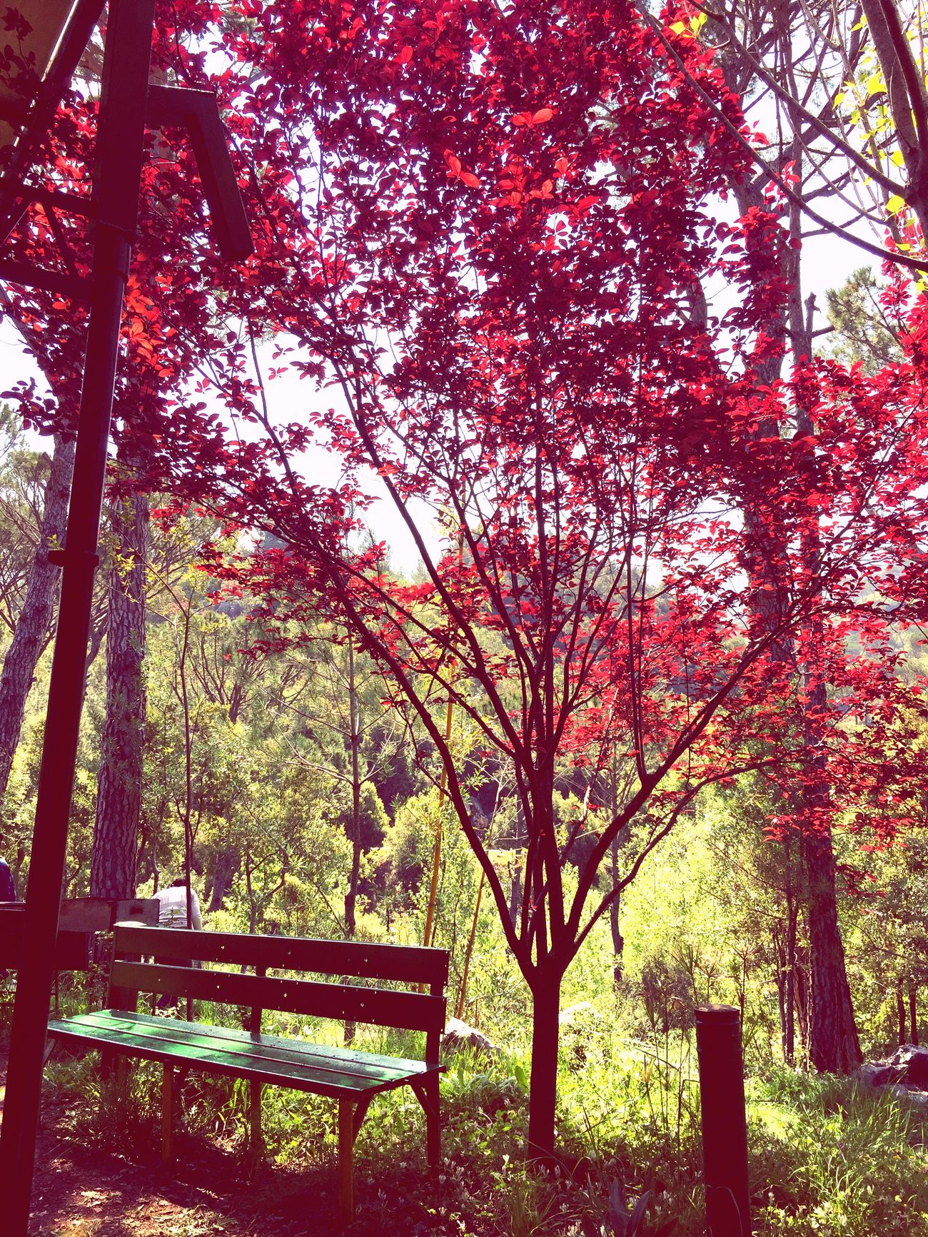 Stunning view Beauty In Nature Beautiful Colors Of Nature Green And Red Leaves Mobile Photography The Place I'm Now