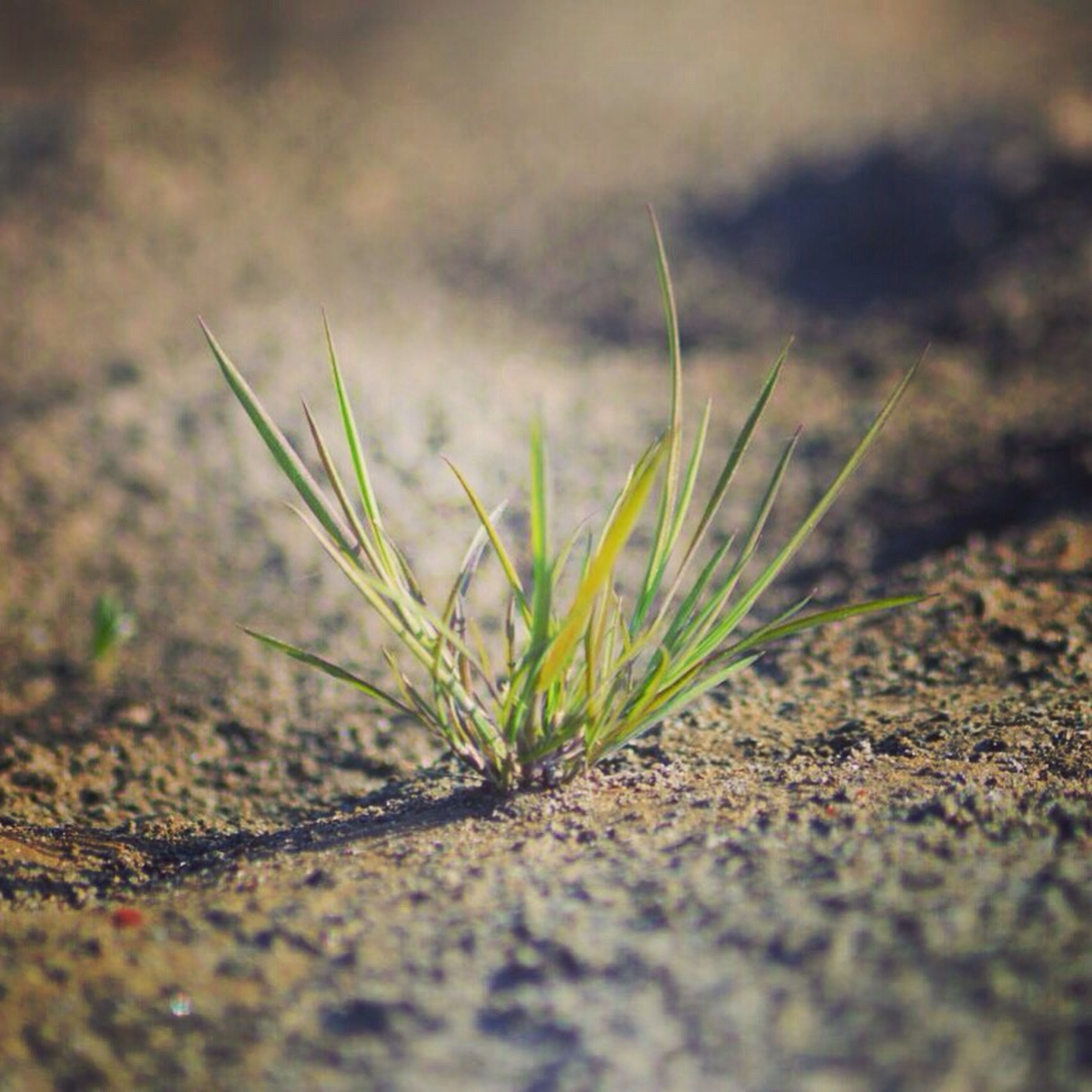 growth, selective focus, plant, close-up, surface level, nature, focus on foreground, growing, leaf, field, green color, stem, fragility, grass, tranquility, day, ground, outdoors, beginnings, no people