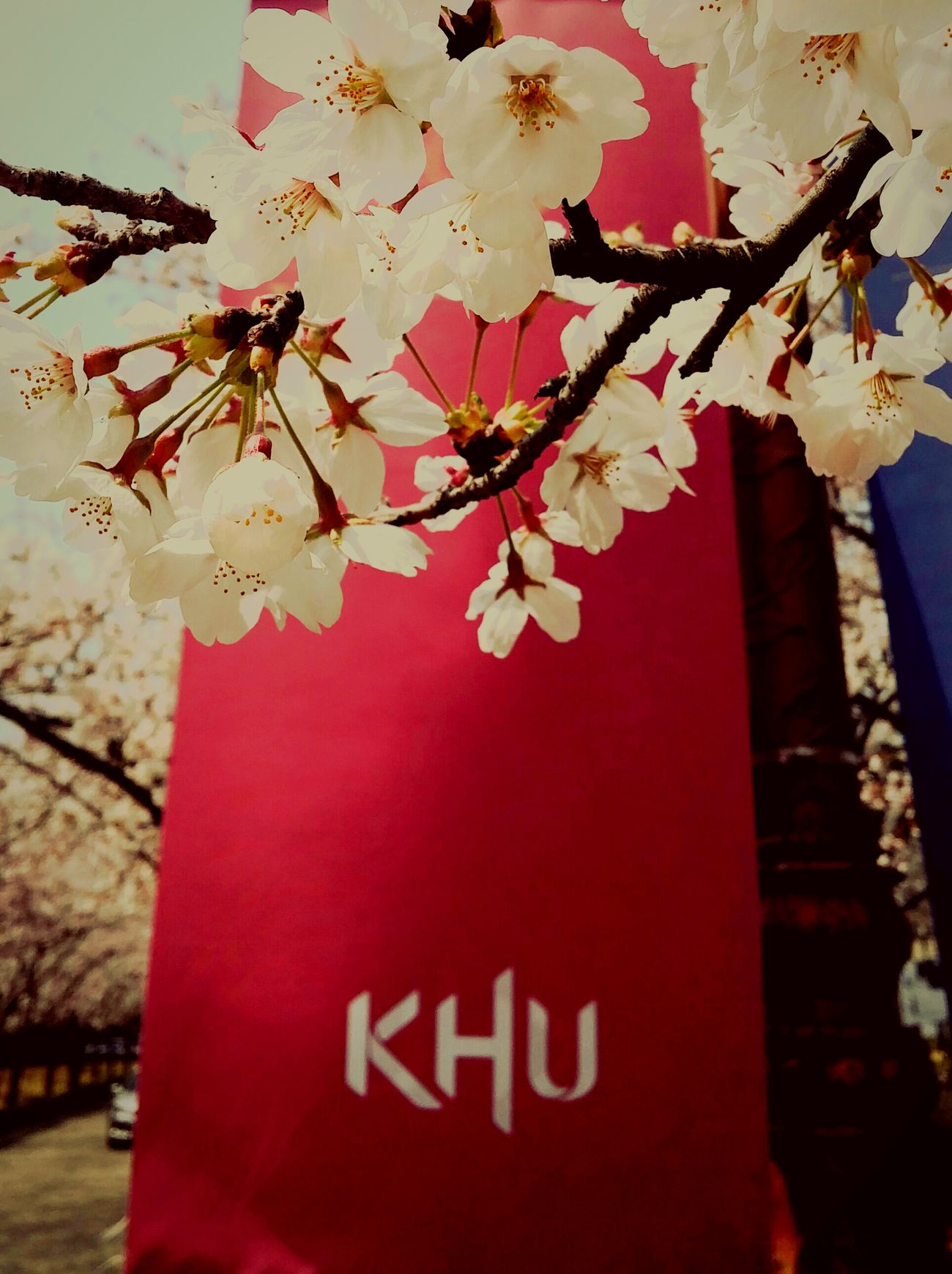 University University Campus Kyunghee Spring Spring Flowers
