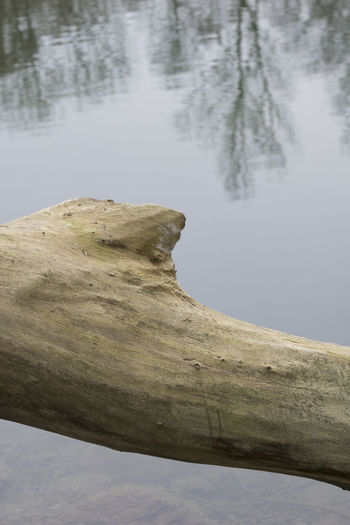 Old Tree trunk in front of a Mountain RiverBark Close-up Cold Day Drawing Landscape Morning Nature Nature Reserve Outdoors Reflections Reflections In The Water Season  Structure Tree Bark Tree Trunk Trunk Water