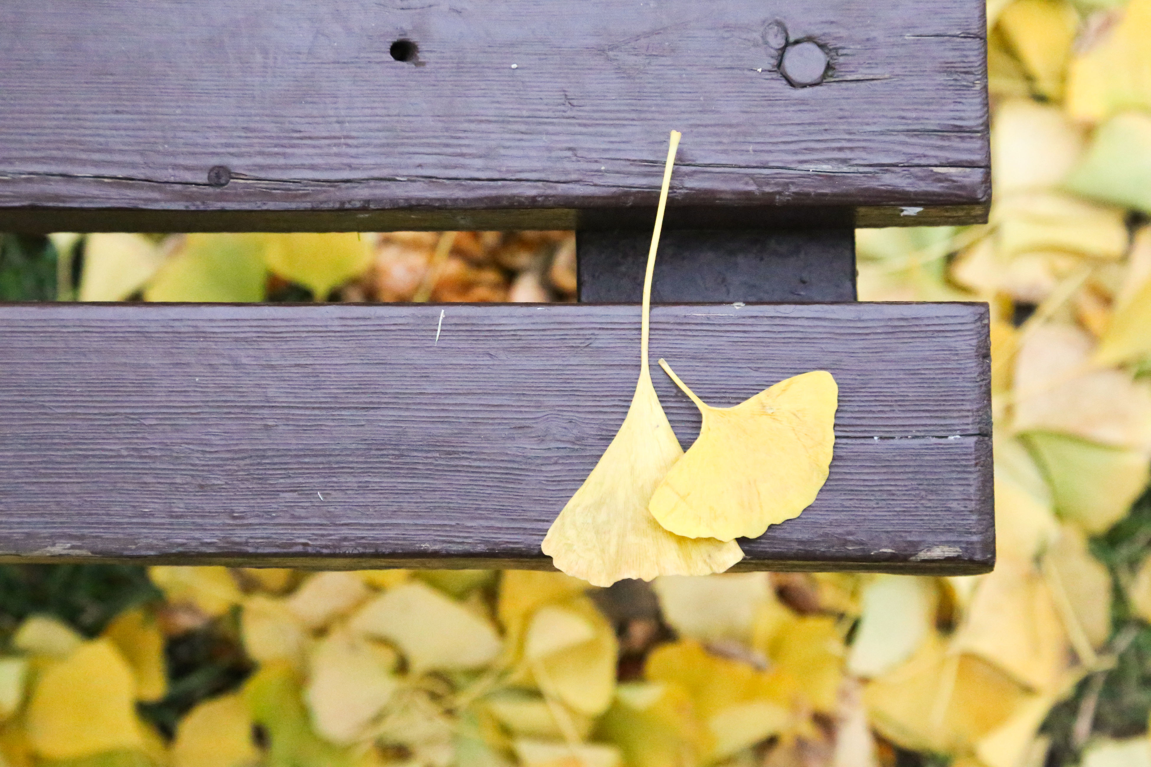 wood - material, wooden, wood, plank, bench, close-up, yellow, leaf, focus on foreground, day, selective focus, outdoors, no people, autumn, nature, table, high angle view, dry, old, sunlight