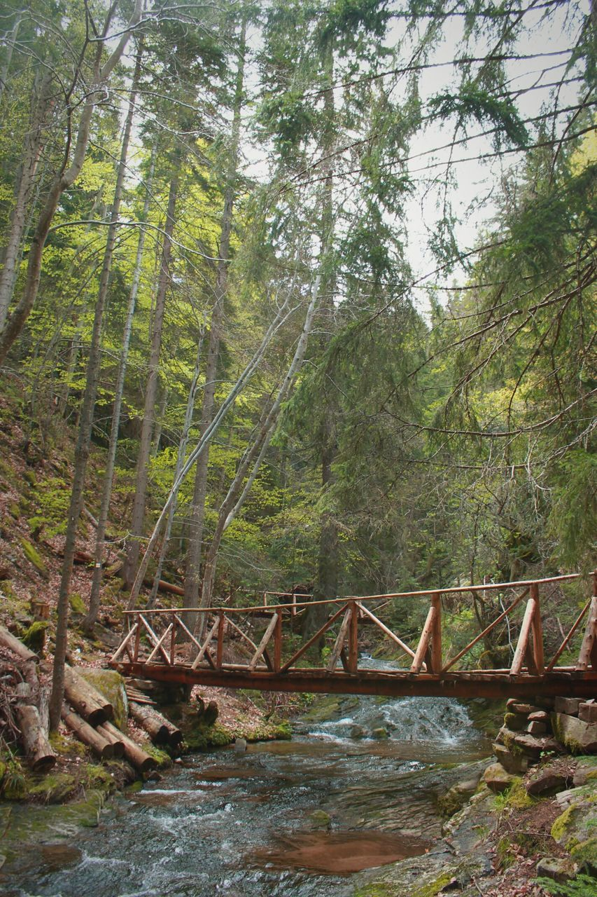 tree, forest, railing, nature, day, bridge - man made structure, outdoors, no people, growth, beauty in nature, sky
