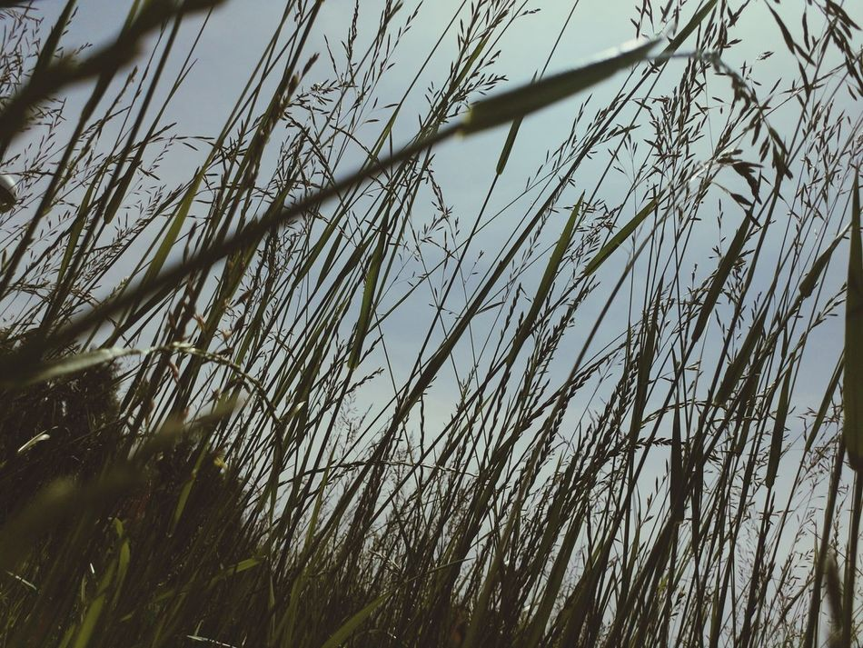 Low Angle View Growth Nature No People Outdoors Day Backgrounds Beauty In Nature Sky Grass Close-up Tree