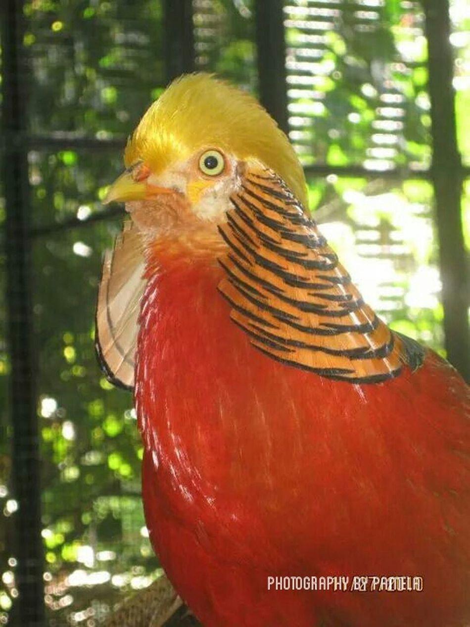 First Eyeem Photo Nature Birds Hawaii⍥⃝