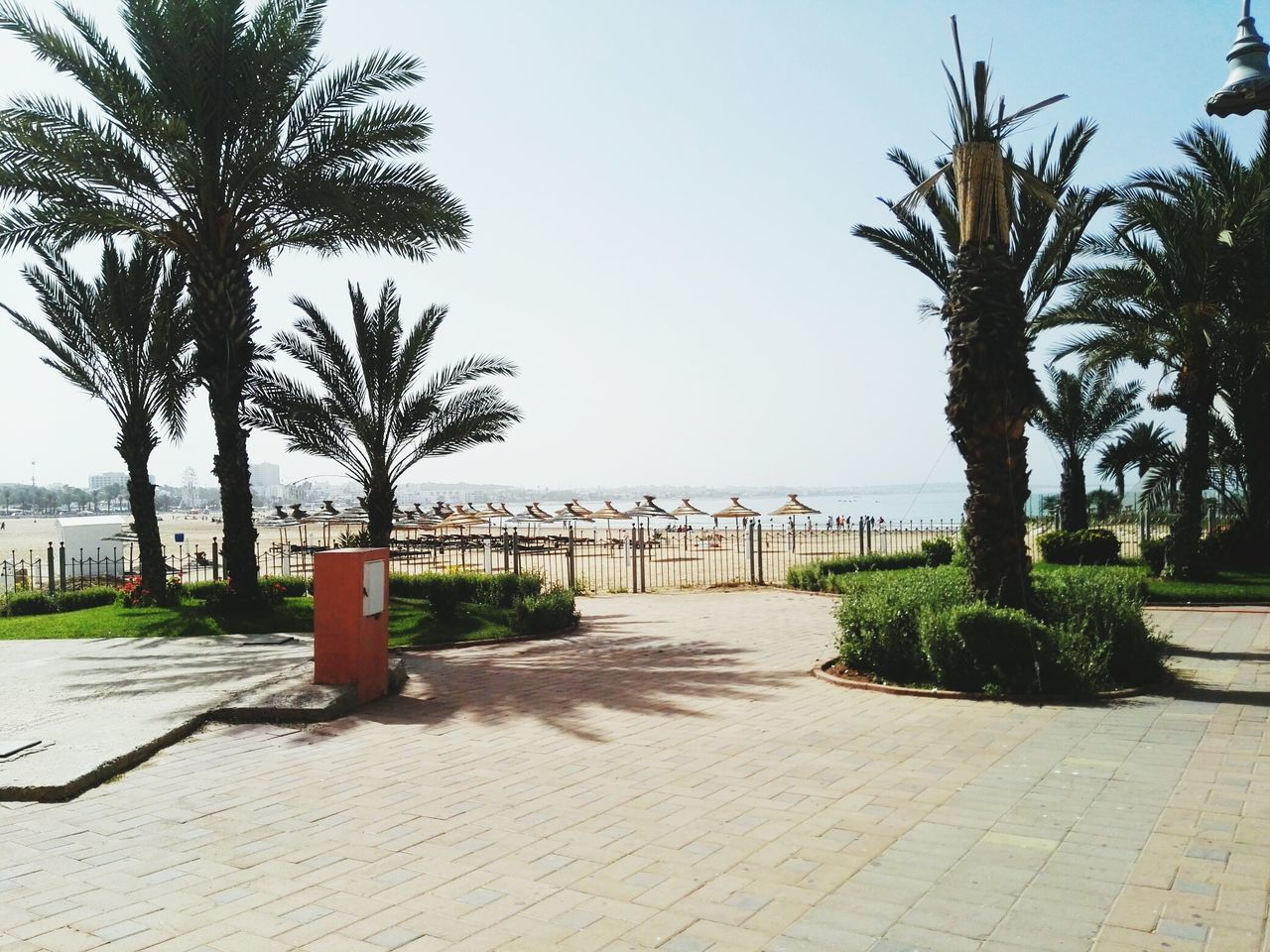 Good morning Agadir Tree Outdoors Sea Beach Sky Day Water Horizon Over Water Sand No People Shadow Palm Tree Scenics Nature Clear Sky Morroco Agadir Everyday Joy Traditional Architecture