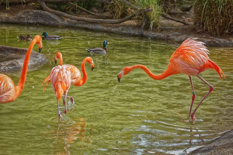 Flamingo Animal Themes Animal Wildlife Animals In The Wild Beak Beauty In Nature Bird Day Flamingo Lake Nature No People Outdoors Wading Water EyeEmNewHere