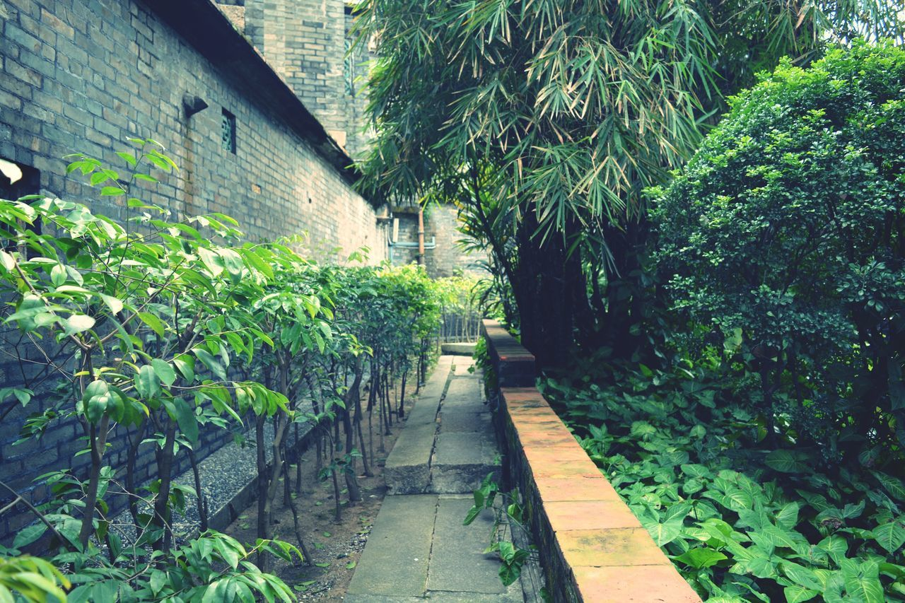 plant, growth, architecture, nature, foliage, no people, outdoors, day
