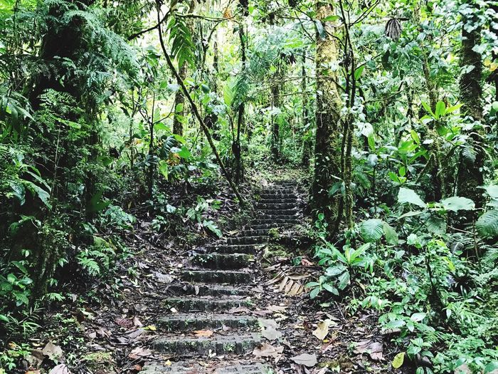Pathway In The Forest Nature Forest Outdoors Nature Photography Hike Monteverde CostaRica Monteverde Cloud Forest Reserve Hugging A Tree Forest Photography Nature_collection Forest Trees Hiking