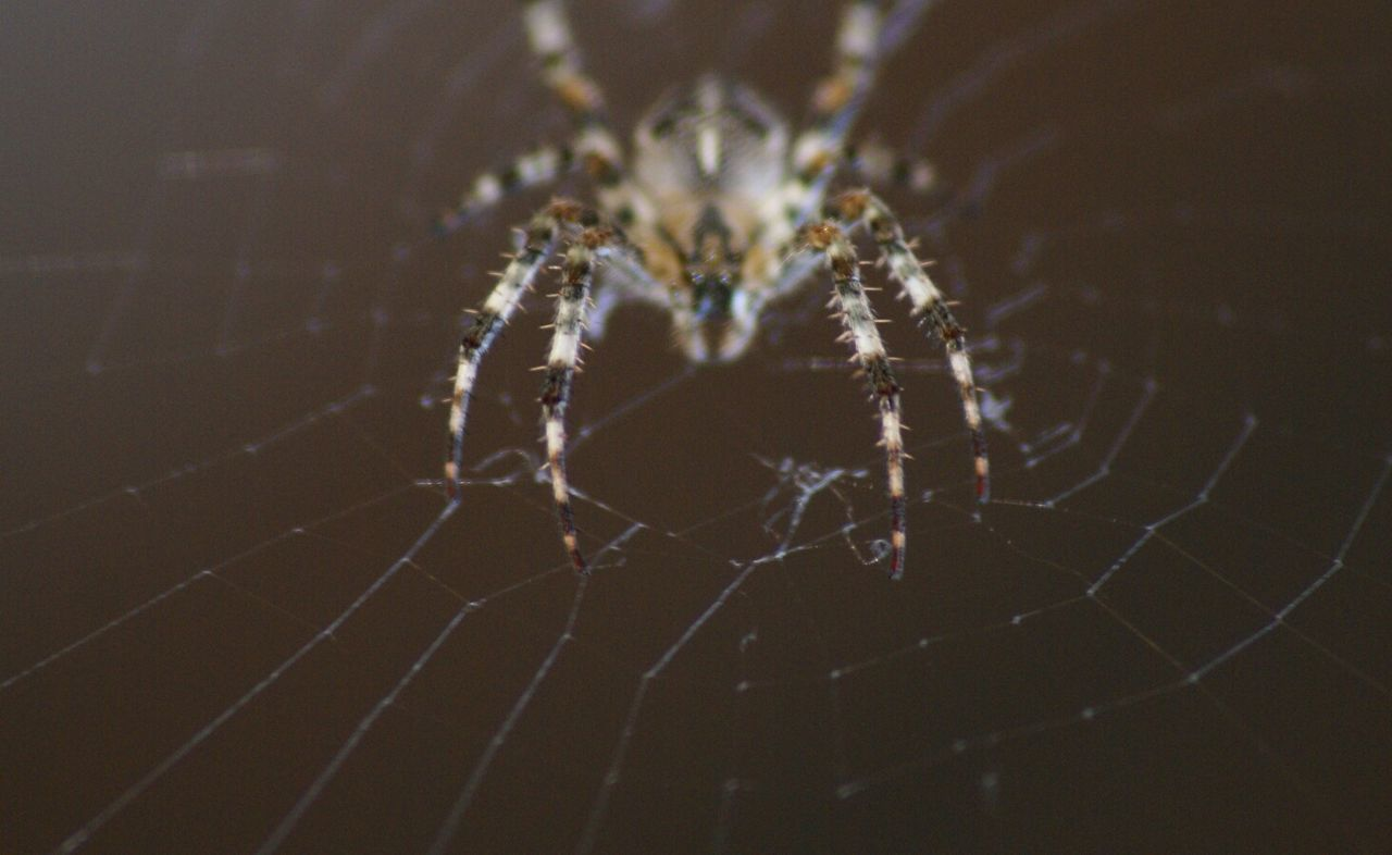 Beautiful stock photos of spider's, Animal Leg, Animal Themes, Close-Up, Focus On Foreground