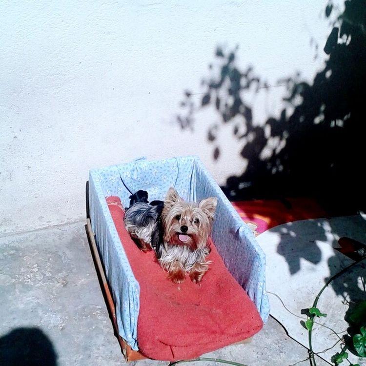 Lua & Orion Love ♥ Cute Pets Cute♡ Sao Paulo - Brazil Apenas Fofura. *.*