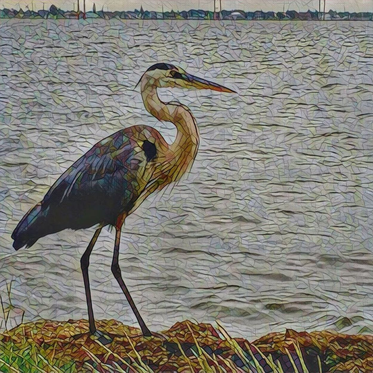 Mosaic Effect Great Blue Heron Master Of Camuflage Camuflage Artist Nature Beauty Artphotography Quiet Moments Patience Is The Key