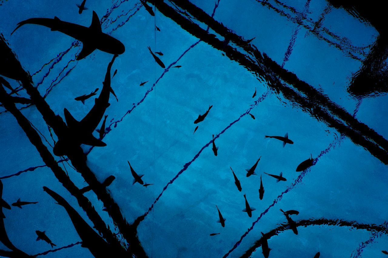 High Angle View Of Silhouette Sharks At Aquarium