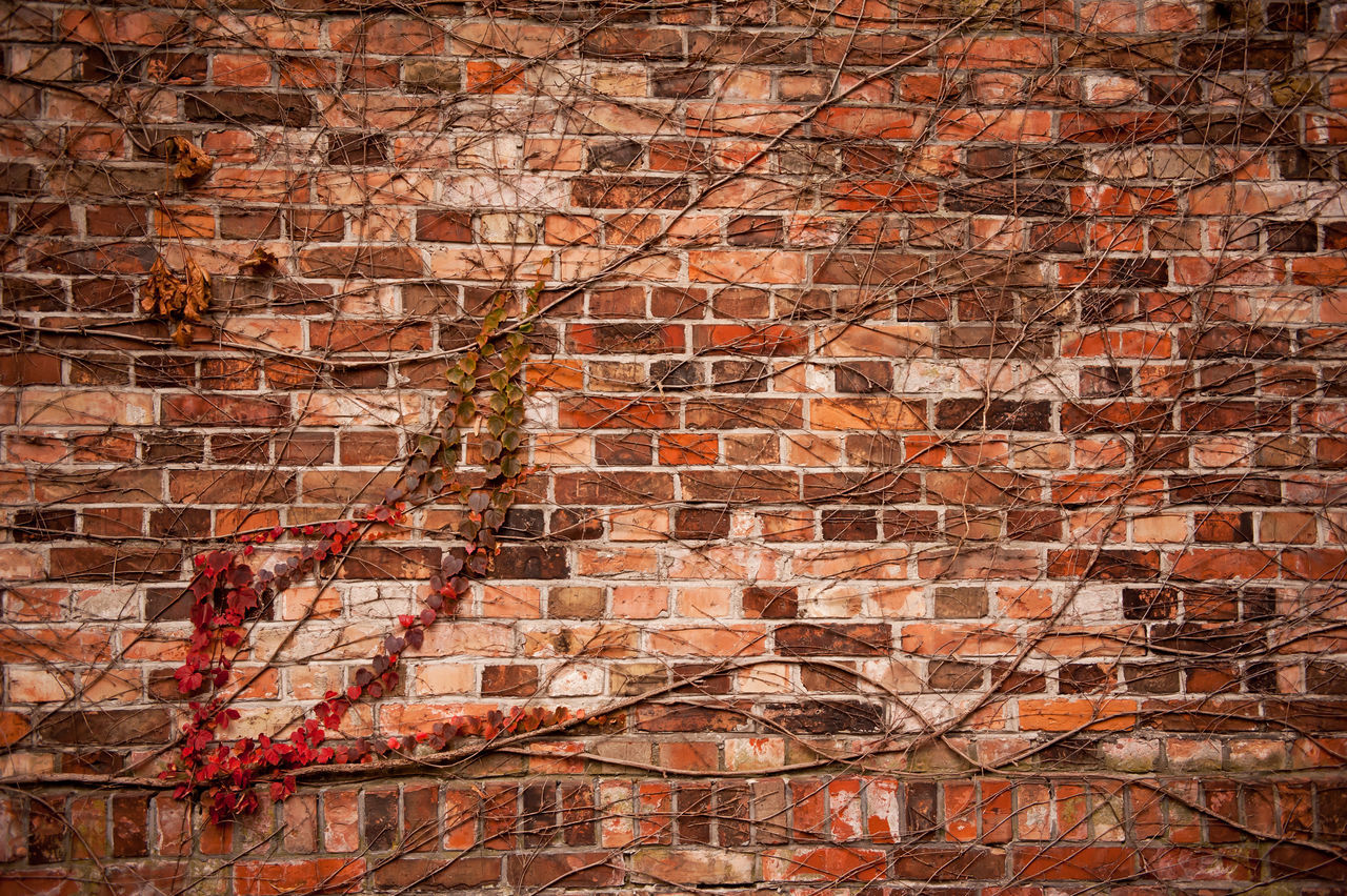 Red ivy hedge climber on wall, wilted creeper plant in autumn season abstract. Photo taken in Poland, horizontal orientation, nobody. Architecture Autumn Backgrounds Brick Brick Wall Brick Wall Bricks Built Structure Creeper Plant Deciduous Foliage Hedge Ivy Leaves No People Plant Plants Rambler Wall