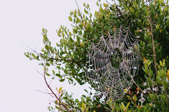 Spider Web Dew Tree Nature Green Color Plant Growth Outdoors No People Day