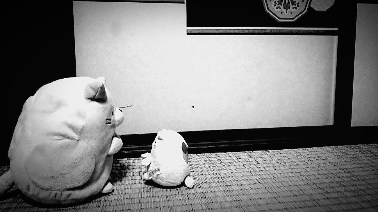 [16.05.31] 教え。 Black & White Monochrome Cool Japan Enjoying Life Japan Pixlr Black And White Japanese  Creative Light And Shadow Toys Toy Indoors  No People 畳 すみっコぐらし Stuffed Animal ねこ ぬいぐるみ