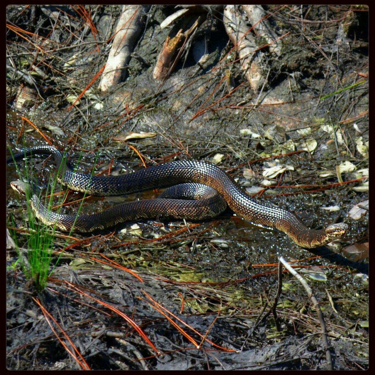Snakes Check This Out My Country Life Wildlife & Nature
