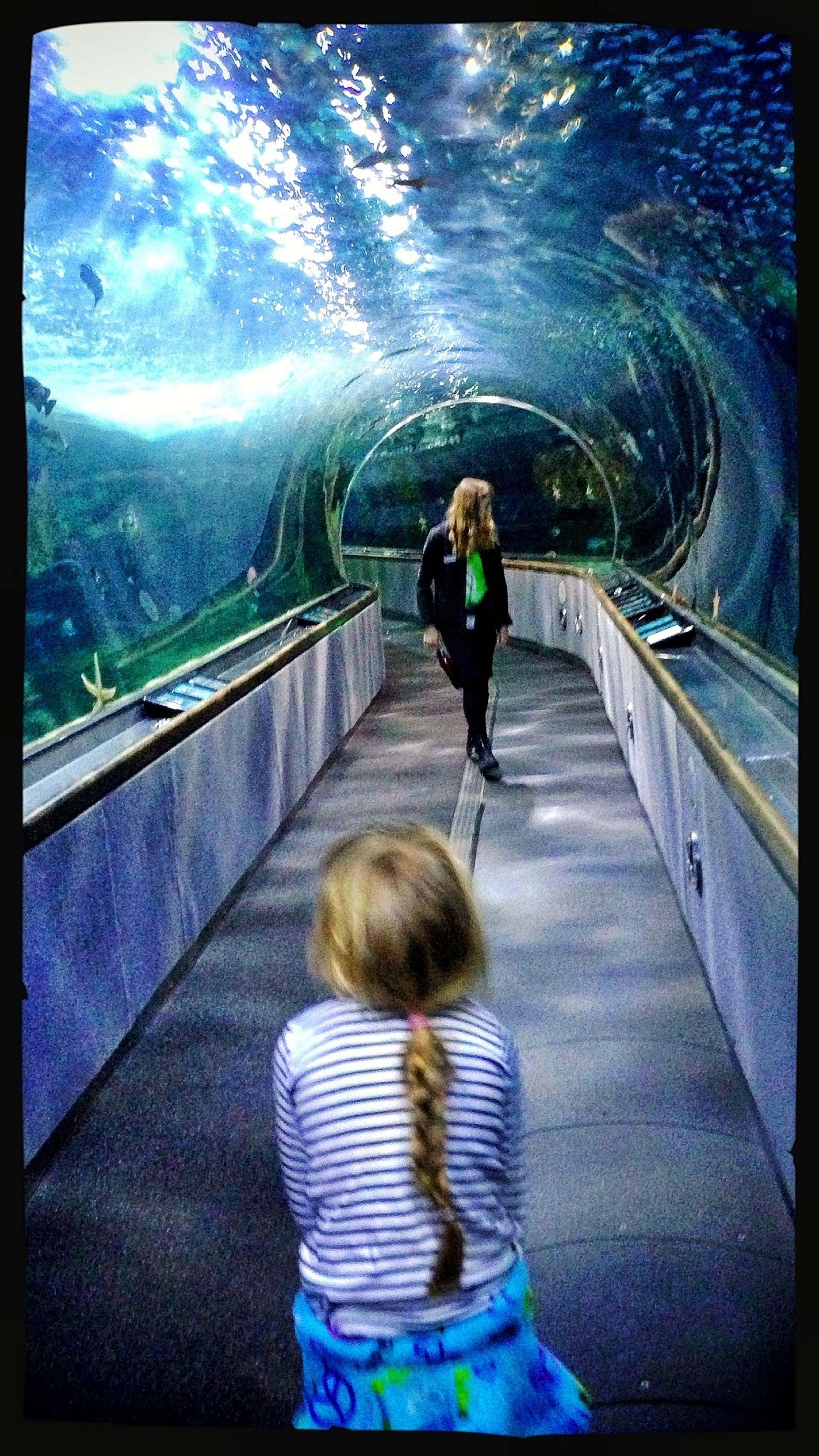 Aquarium Taking Photos Tunnel Colorful