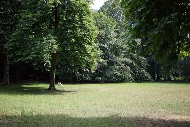 Park Summer Couple Green Trees Nature