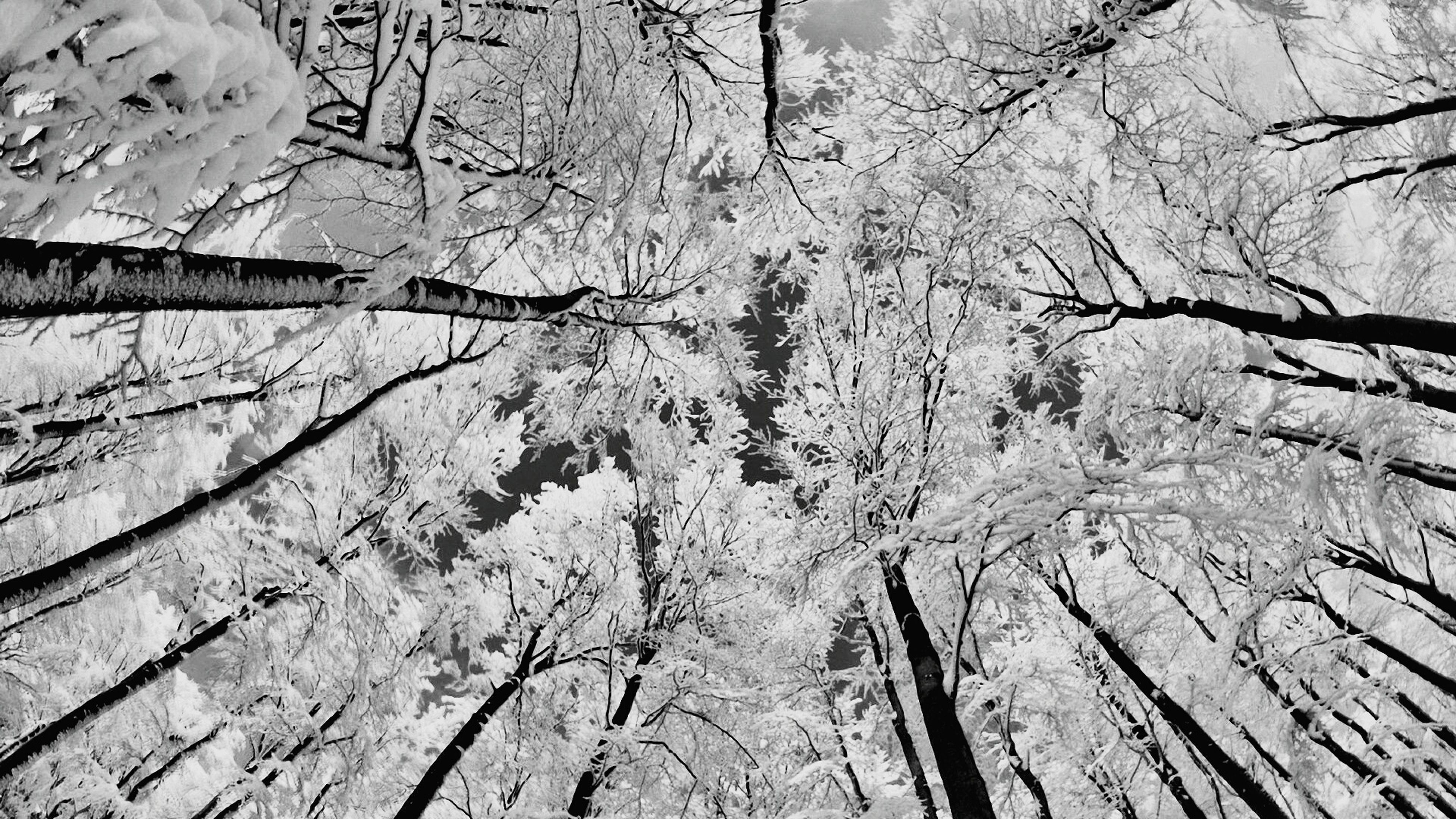 textured, backgrounds, full frame, close-up, winter, pattern, snow, high angle view, nature, rough, wood - material, cracked, day, cold temperature, outdoors, season, natural pattern, no people, tranquility, bare tree