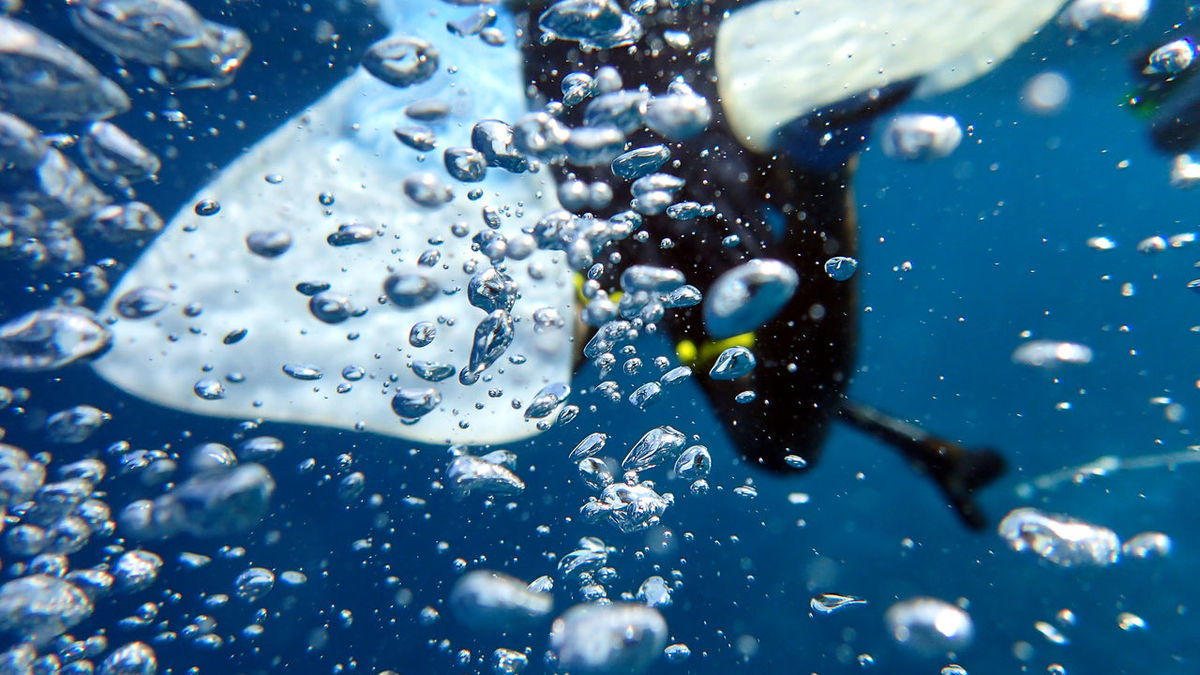 Close up shot of man snorkeling, from behind Bubbles Close-up Day Fins Holiday Marine Nature Ocean One Person Outdoors Sea Snorekling Swimming Water